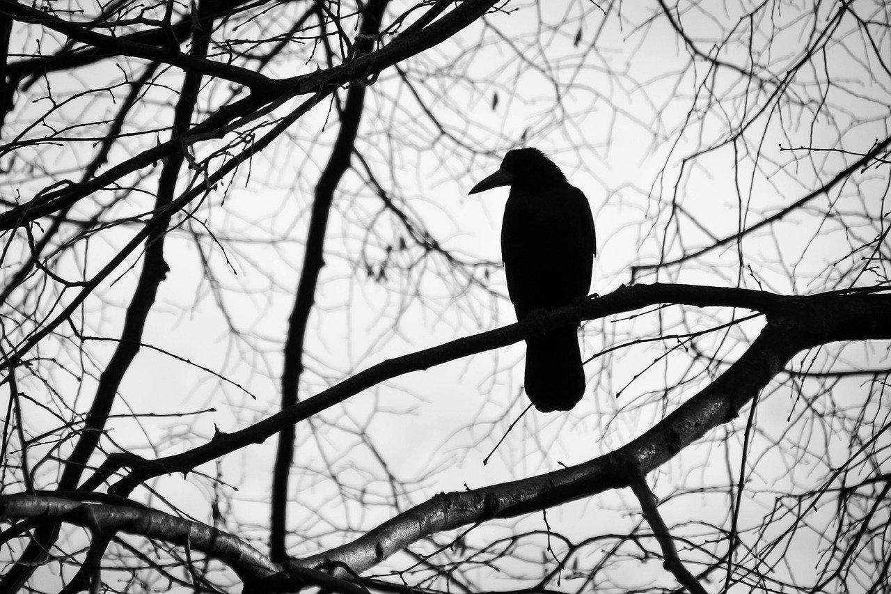 bird 2071185 1280 1