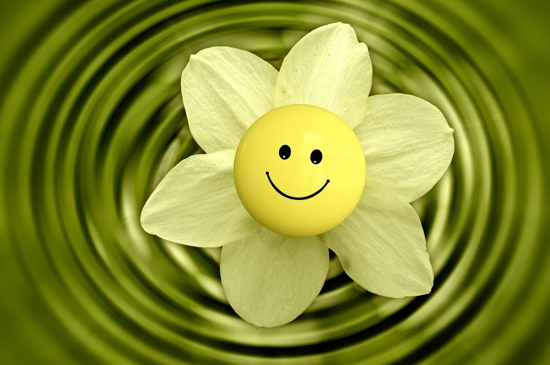 blossom 233838 1920