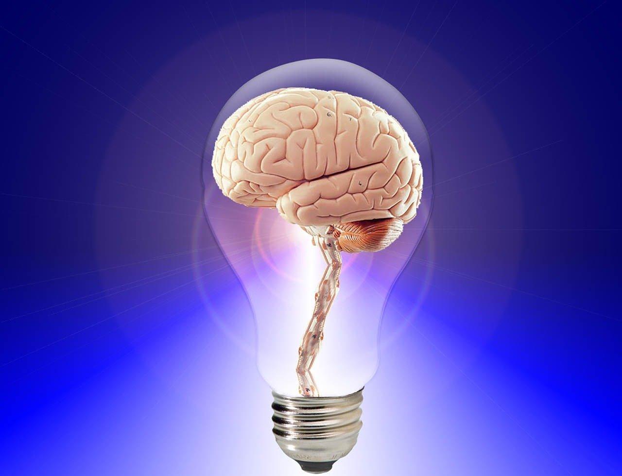brain 20424 1280 1