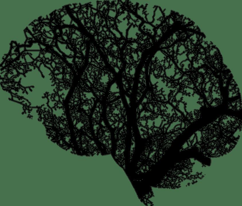 brain 2146817 960 720 1