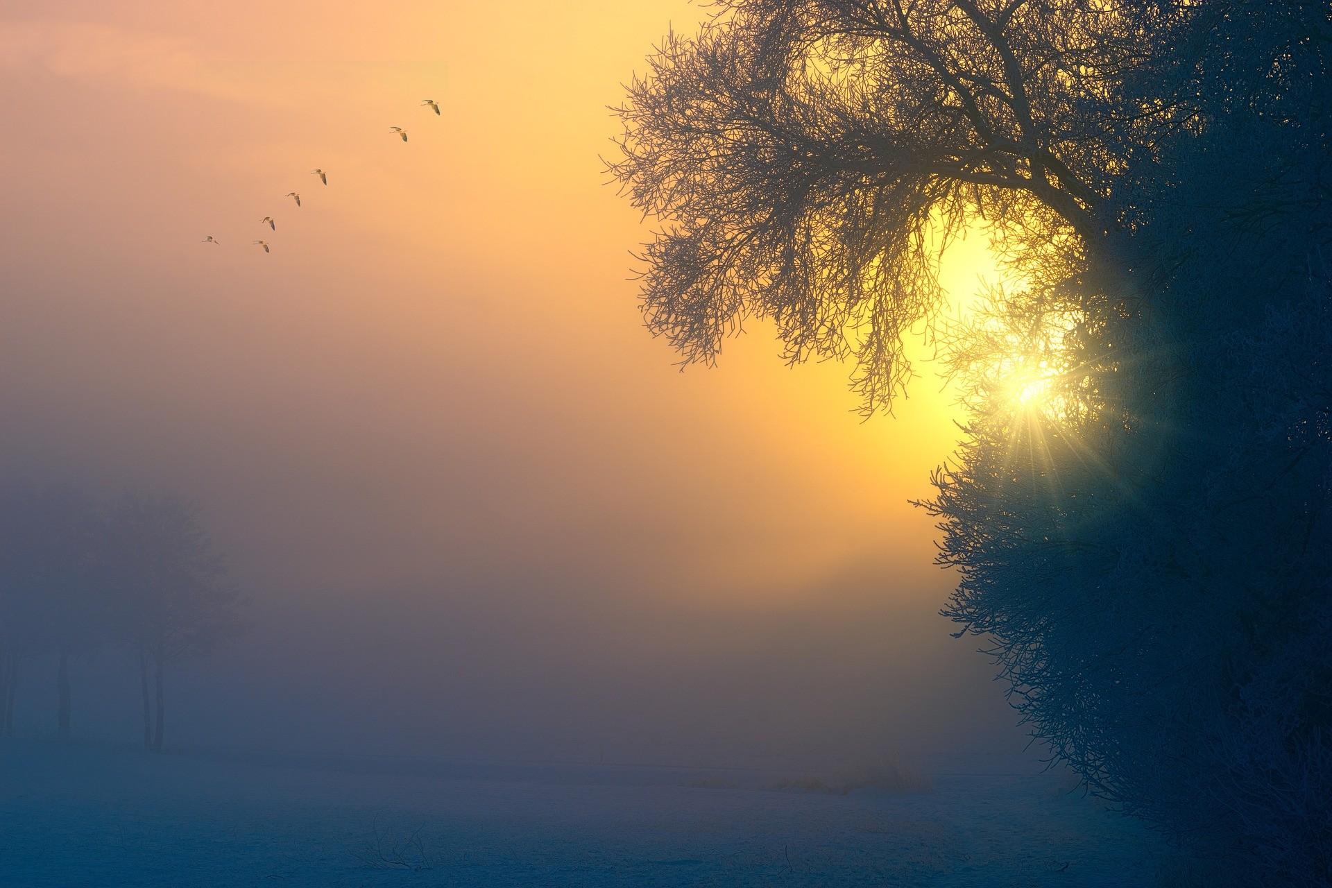 fog 3196953 1920