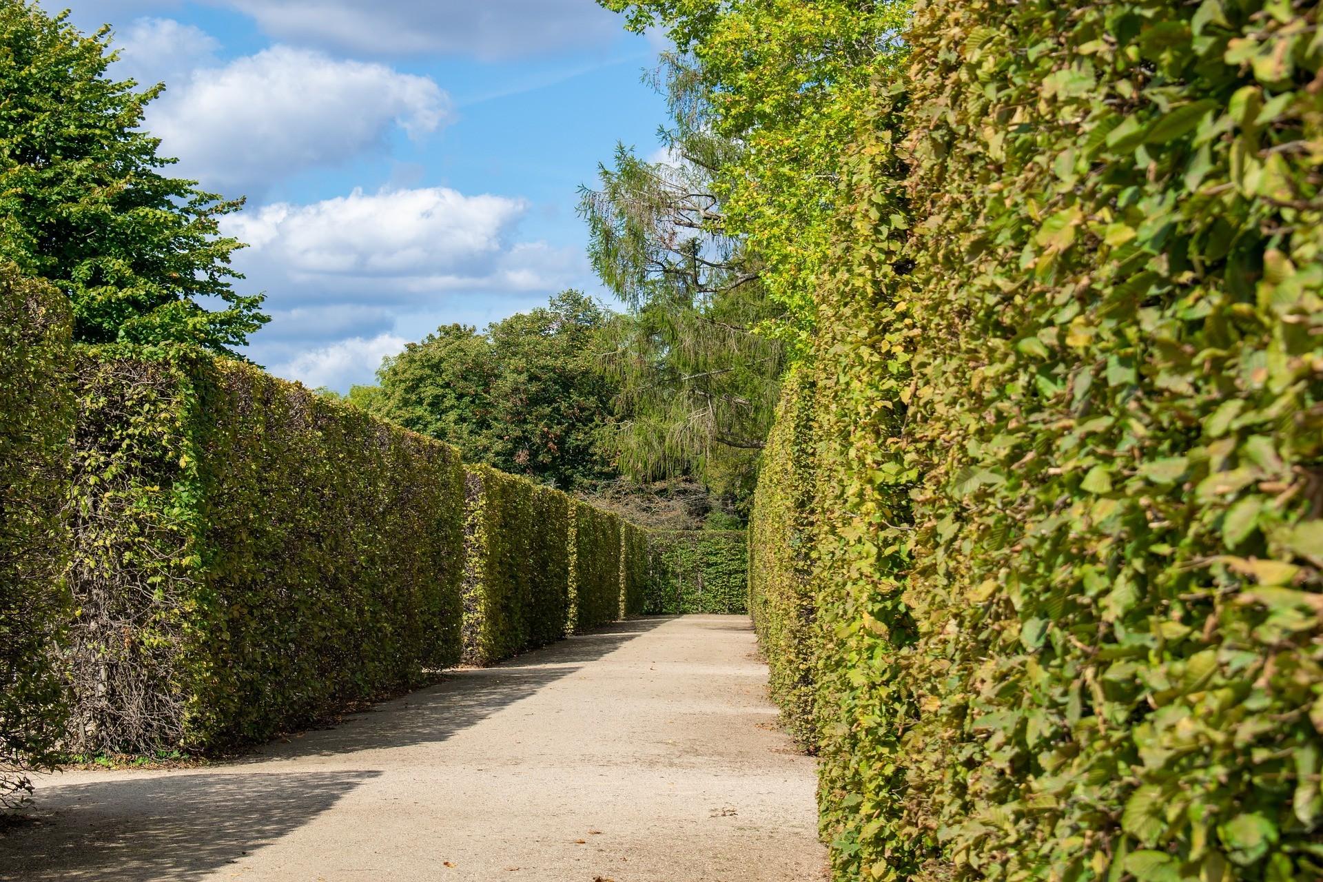 hedge 4476859 1920