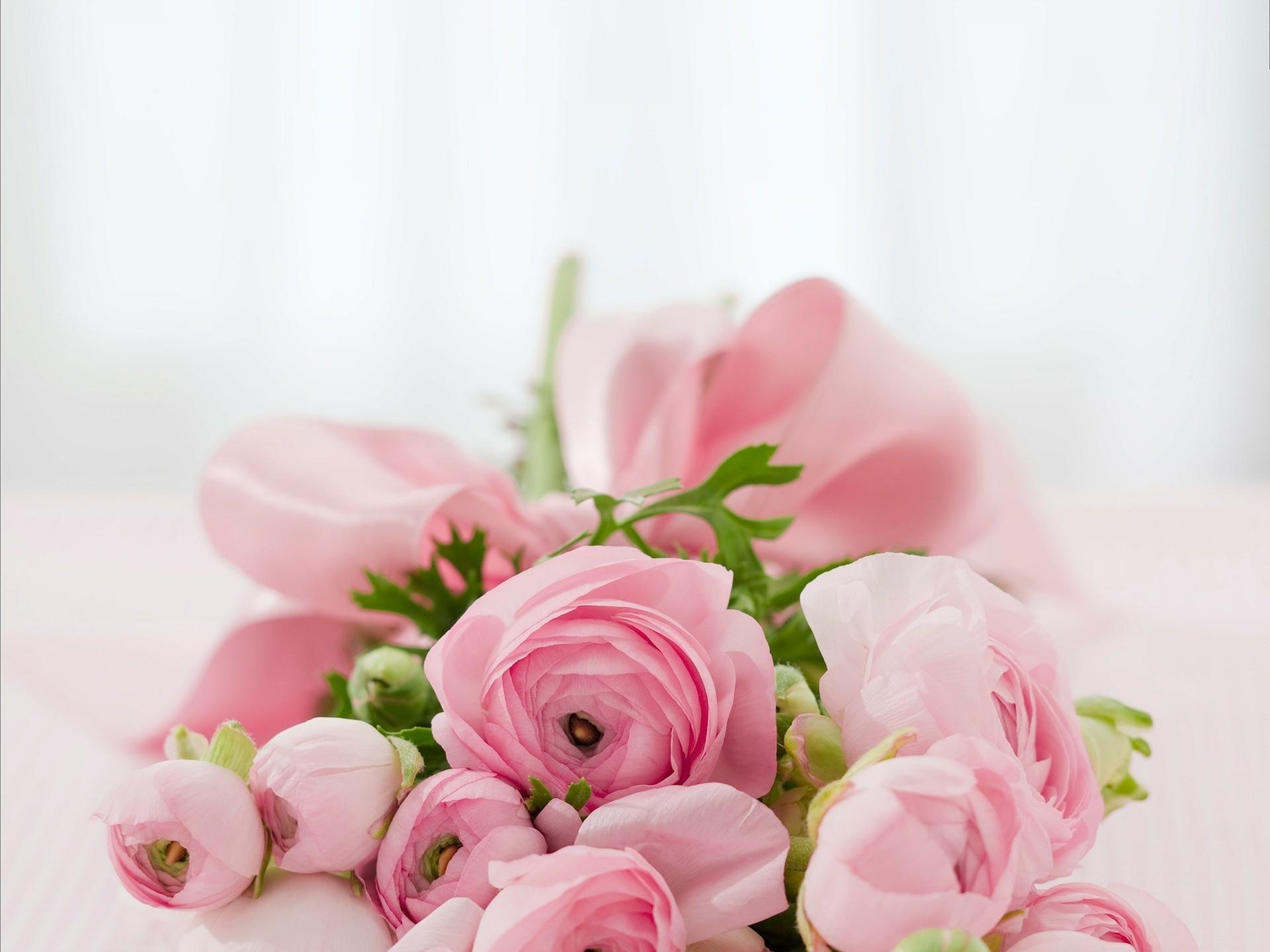 roses 142876 1920
