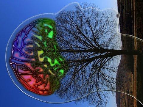 למדיטציה עם תדר תטא לאימון גלי מוח